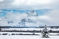 Not all Christmas Trees need to be decorated.  The Grand Teton and clearing storm in Grand Teton National Park