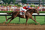 Alydar, Jorge Velasquez up, wins the Grade I Whitney Handicap at Saratoga.  © 1978 Barbara D. Livingston. All rights reserved. easygoer78@aol.com