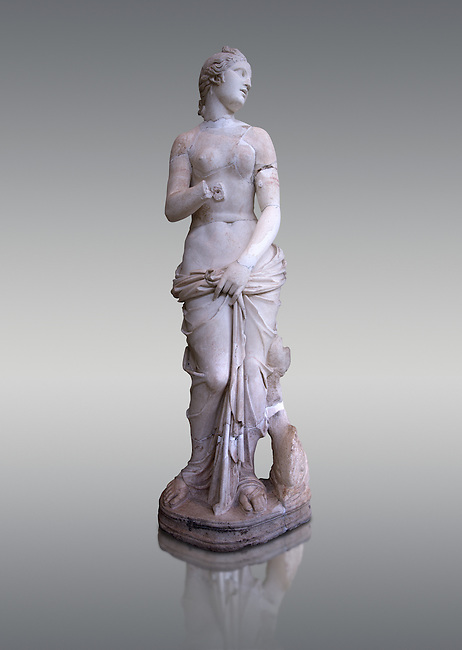 The Roman Venus Statue, the Goddess of Love, follows the style of a modest Aphrodite, known by other Roman replicas are copies of Ttththird century BC Hellenistic Greek statues now lost. Dated circa 1st quarter of second century AD, the Venus statue was excavated from the Odeon of Carthage. The National Bardo Museum, Tunis.   Against a grey background.