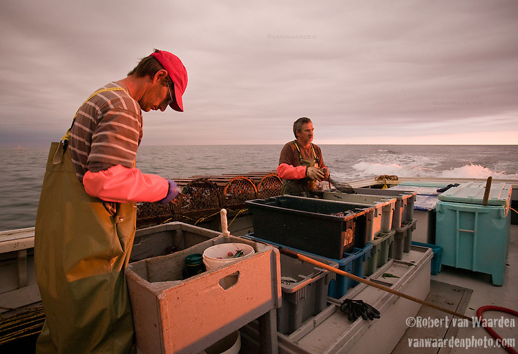 Fisherman prepare the bait bags for the lobster traps.