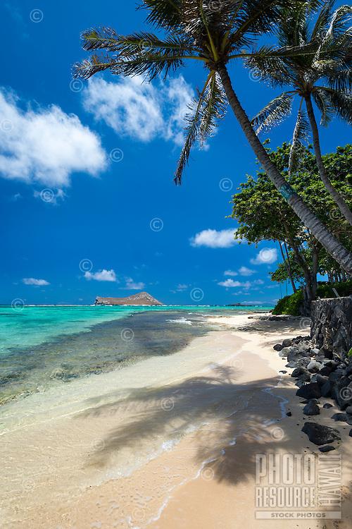 A palm tree throws it shadow on a tropical beach on the Windward coast of O'ahu.