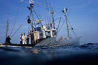 """Europe/France/Aquitaine/64/Pyrénées-Atlantiques/Pays Basque/Saint-Jean-de-Luz:  le Thonier Canneur ou Thonier Bolincheur """"Aïrosa""""  à la pêche au thon à la  canne,les rampes à eau  sont mises en action pour camoufler le bateau.La pêche se  pratique au vif avec comme appât vivant (peïta) de la sardine - Auto N°:2014-149, Auto N°:2014-150, Auto N°:2014-151, Auto N°:2014-152, Auto N°:2014-153, Auto N°:2014-154, Auto N°:2014-155"""