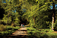 Rannoch Woods, Johnstone, Renfrewshire