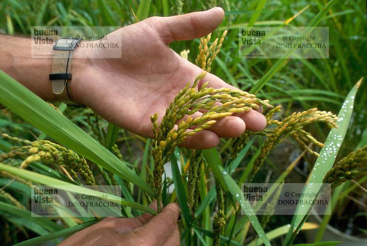 - Institute of Search on the Rice Cultivation of Vercelli, experimental rice field....- Istituto di Ricerca sulla Risicoltura di Vercelli, risaia sperimentale