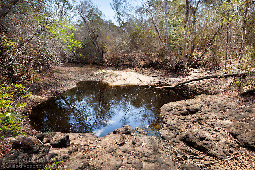 Shrinking waterhole in dry riverbed, dry deciduous forest, Kirindy Forest. Western Madagascar. October.