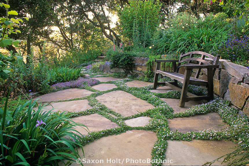 Xeriscape California garden under native oak tree (Quercus agrifolia); bench on cut stone patio with thyme in cracks