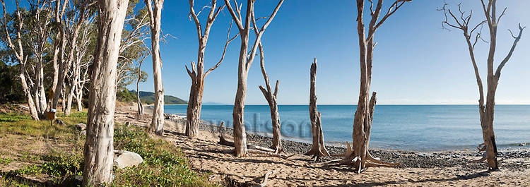 Old Melaleuca forest at Wangetti Beach, Cairns, Queensland, Australia