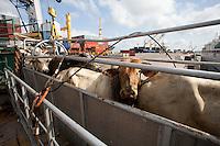 O navio ABOU KARIM de bandeira libanesa,  e tripulação síria, carrega 2500 cabeças de gado da exportadora AgroExport com destino a Venezuela, De acordo com dados da CDP-Cia Docas do Pará, de janeiro a setembro deste ano já foram embarcadas no porto de Vila do Conde cerca de 520.000 mil cabeças de gado para diversos países no oriente médio e américa do sul ,  por grandes exportadoras/produtoras de gado como a Mercúrio, Minerva e Kaiapós entre outras.Foto Paulo SantosPorto de Vila do  Conde, Barcarena, Pará, Brasil.09/10/2013