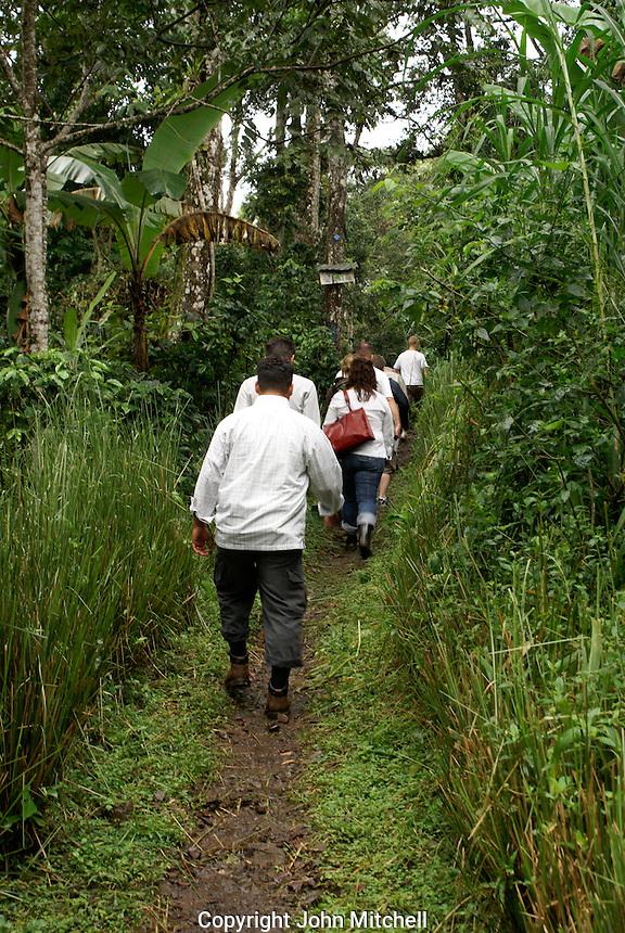 Hikers in a shade grown organic coffee lot at Finca Esperaza Verde  near Matagalpa, Nicaragua