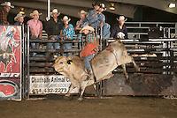 IBR - Warrenton, VA - 7.16.2015 - Bulls & Action