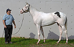 Lake Barkley (2015 white Thoroughbred filly, owned by Berva Megson)