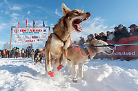 A Ray Redington Jr. dog leaps with excitement on Willow Lake at the Official Start of the 2018 Iditarod Sled Dog Race in Willow, Alaska on March 04, 2018. <br /> <br /> Photo by Jeff Schultz/SchultzPhoto.com  (C) 2018  ALL RIGHTS RESERVED