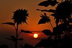 Bighorn Sunrise