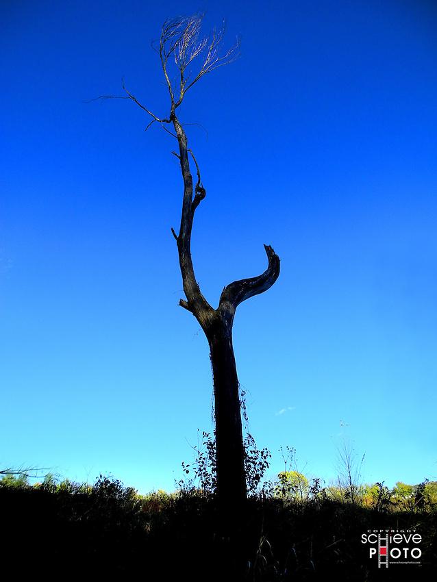 Bare tree trunk against blue sky.