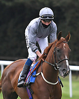 Spring Campaign ridden by Kieran Shoemark goes down to the start  of The Venture Security Handicap Stakes  during Horse Racing at Salisbury Racecourse on 11th September 2020