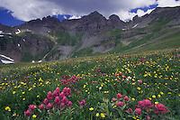 Wildflowers in alpine meadow, Paintbrush, Alpine Avens, Clear Lake, San Juan Mountains, Rocky Mountains, Colorado, USA