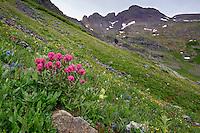 Flowering Mountainside