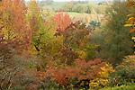 England.; London, Surrey; Winkworth Arboretum;