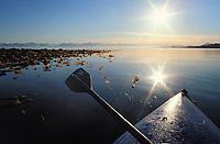 Sea Kayaking in the kelp near Hinchinbrook Island, Prince William Sound, Alaska