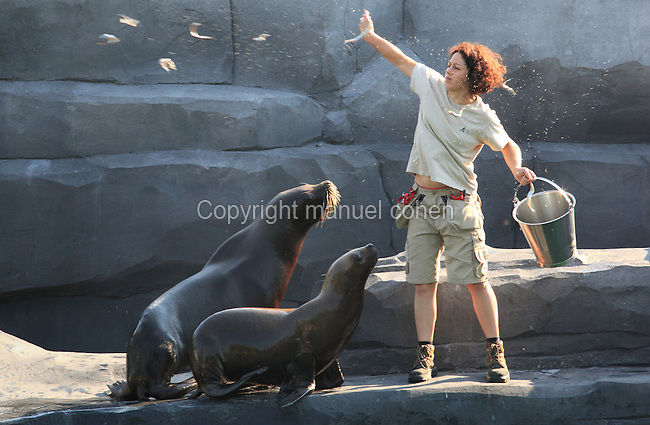 Staff feeding South American fur seals (Arctocephalus australis) in the Zone Patagonie of the new Parc Zoologique de Paris or Zoo de Vincennes, (Zoological Gardens of Paris or Vincennes Zoo), which reopened April 2014, part of the Museum National d'Histoire Naturelle (National Museum of Natural History), 12th arrondissement, Paris, France. Picture by Manuel Cohen