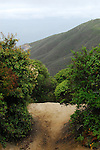 Trail on Montara Mountain