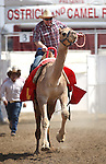 Geoff Burr races at the International Camel Races in Virginia City, Nev., on Friday, Sept. 9, 2011. .Photo by Cathleen Allison