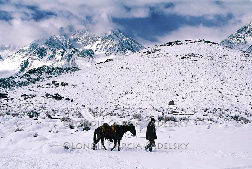 Cowboy leading a saddled mustang in the snow covered Sierra Nevada moutains, California