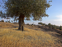 OR_LOCATION_45168
