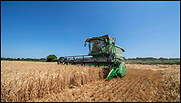 BNPS.co.uk (01202 558833)<br /> Pic: PhilYeomans/BNPS<br /> <br /> The heatwave has caused an almost unheard of June harvest at a British farm.<br /> <br /> Bisterne Estate in Ringwood, Hants, produces seed barley, milling wheat and biscuit rye.<br /> <br /> Farm manager Martin Button says this is the earliest harvest there since 1976.<br /> <br /> They began harvesting their 750 acres of arable land on June 28, two weeks earlier than normal.<br /> <br /> However, they are expecting a significantly reduced yield as the barley grain is much smaller than in a typical year, which was been attributed to the dry summer.<br /> <br /> He said: &quot;We've never started in June in the 30 years I've been here.<br /> <br /> &quot;The earliest I can remember is July 2, and we would normally start the harvest between the 12th and 14th of July.