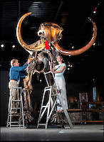 BNPS.co.uk (01202 558833)<br /> Pic: PhilYeomans/BNPS<br /> <br /> Elephant in your room??<br /> <br /> Alistair Morris and Linsay Hoadley from Summers Place give the enormous mammoth a final dusting.<br /> <br /> Interior designers fortunate enough to have a house big enough can now bid on this Woolly Mammoth skeleton being sold at Summers Place in West Sussex. <br /> <br /> Despite being over 10,000 years old and nearly 12 feet tall bidding is likely to be fierce for the ultimate 'Statement peice' although with a &pound;250,000 estimate potential owners will need very deep pockets to secure this unique item.<br /> <br /> The skeleton of the most famous animal of the Ice Age, which died out about 10,000 years ago, is 11ft 6in tall and 18ft long. It also sports enormous 8 foot tusks.<br /> <br /> Auctioneer James Rylands from Summers Place Auctions said it is very unusual to find a complete skeleton and one has not been sold in the UK before.<br /> <br /> The skeleton will be part of an evolution sale at Summers Place Auctions on November 26.