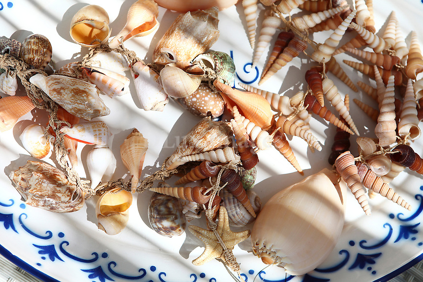 Sea shells on decorative plate