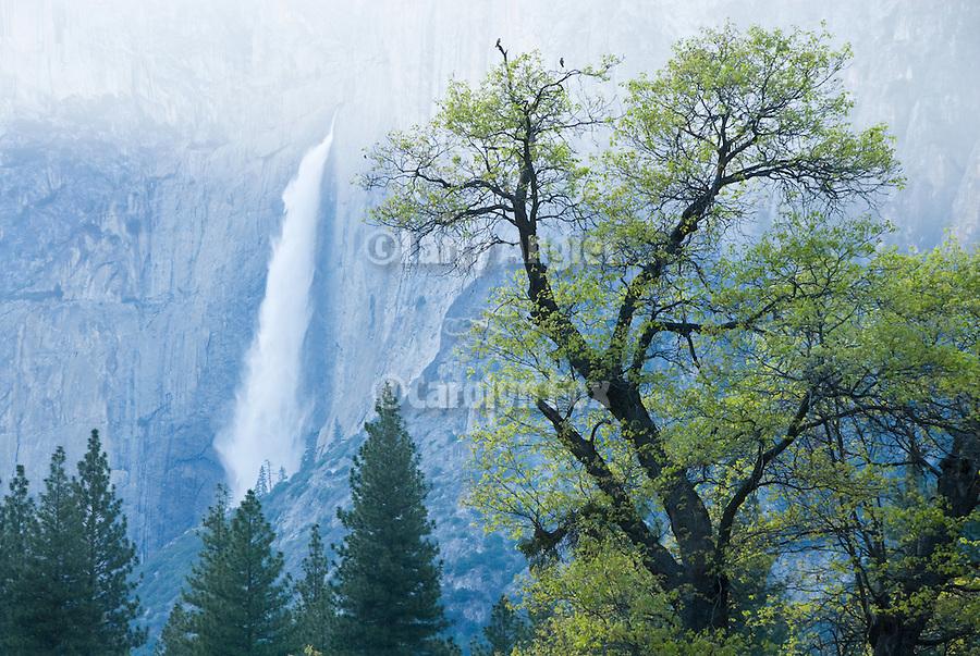 Upper Yosemite Fall, Spring, Yosemite National Park, Calif.