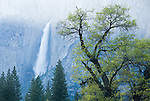 Upper Yosemite Fall, Spring, Yosemite National Park, Calif.