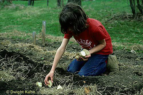 HS05-006z  Potato - child planting potatoes