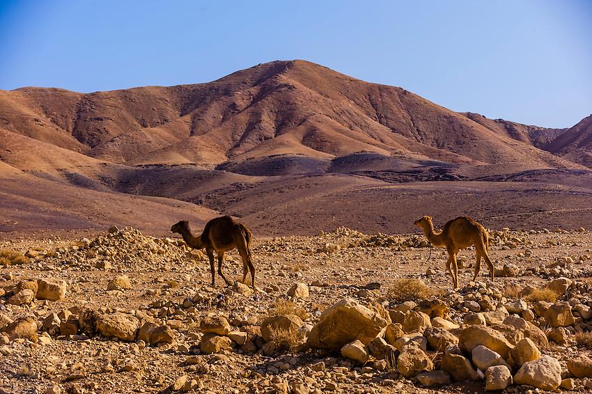 Judean Desert, Israel.