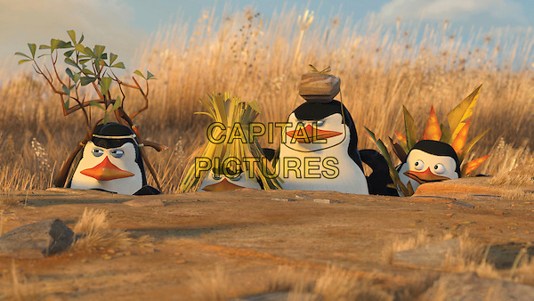 Penguins Kowalski (CHRIS MILLER), Rico, the Skipper (TOM McGRATH) & Private (CHRISTOPHER KNIGHTS).in Madagascar: Escape 2 Africa .*Filmstill - Editorial Use Only*.CAP/FB.Supplied by Capital Pictures.