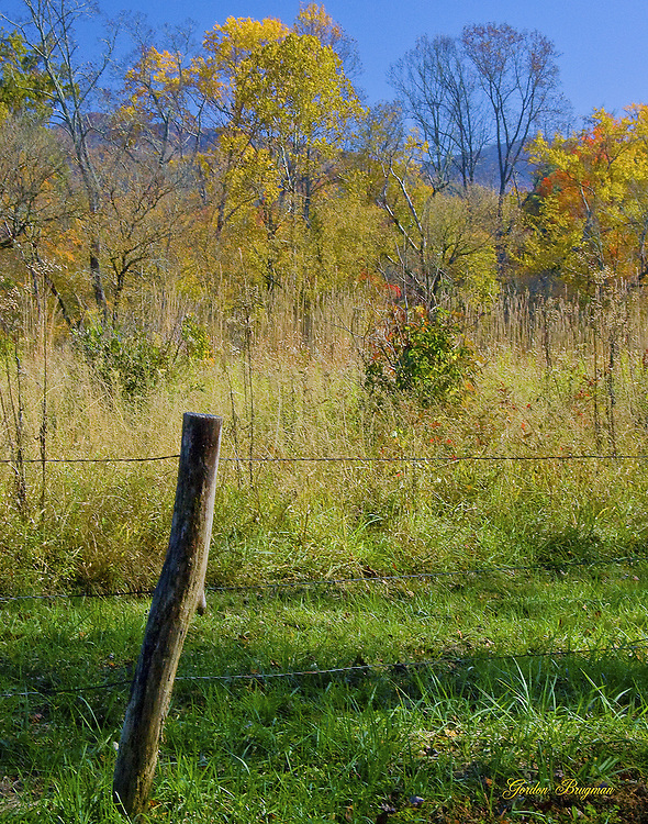 Fall image shot in Cades Cove, GSMNP.