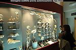 Museo di Anatomia Umana Luigi Rolando. Human Anatomy Museum.