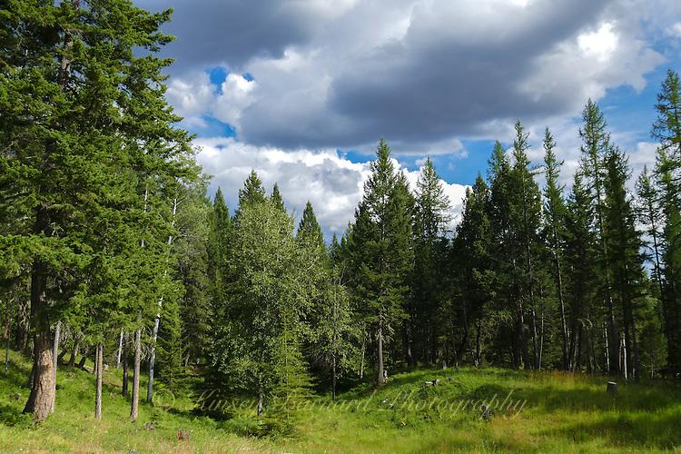 Kootenai National Forest Montana