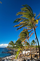 Shoreline scene at ancient Hawaiian village with palms at Lapakahi State Historical Park, Big Island of Hawaii