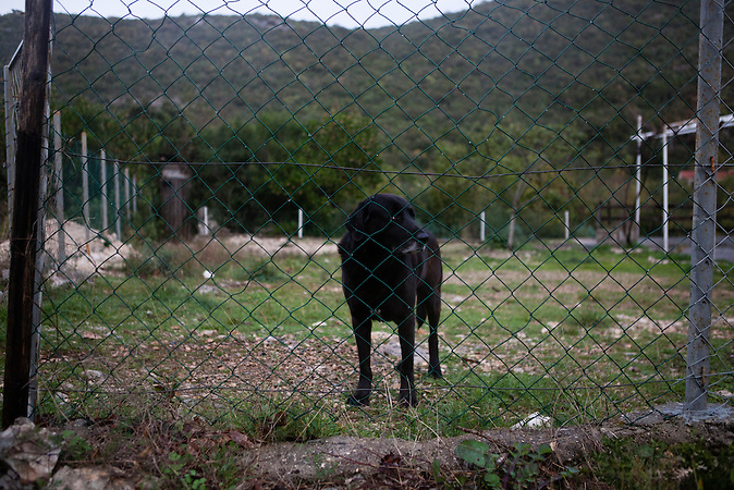 Ein Wachhund auf einem privaten Grundstück in den Bergen bei Neum; Bosnien. / A watchdog on private ground in the hills around Neum.<br /> <br /> Wer die Absicht hat, illegal in die EU einzureisen wählt nicht den Weg über die offizielle Grenze, sondern den Weg durch schwieriges Gelände. Die bergige Topographie erschwert die Kontrolle der grünen Grenze zwischen Bosnien-Herzegowina und Kroatien. / . People who want to cross the boarder to the European Union illegally, don't choose the official boarder but prefer difficult terrain. The mountainous topography of the area make it hard to control the green boarder between Bosnia-Herzegovina and Croatia.<br />