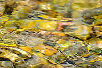 """RIVER AGATE""<br />