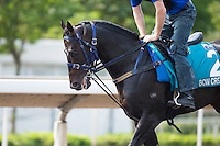 SHA TIN,HONG KONG-APRIL 25:Bow Creek ,trained by John O'Shea,exercises in preparation for the Champions Mile at Sha Tin Racecourse on April 25,2016 in Sha Tin,New Territories,Hong Kong (Photo by Kaz Ishida/Eclipse Sportswire/Getty Images)