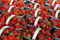 Baskets of fresh strawberries for sale at the Jean Talon public market or Marche Jean Talon, Montreal, Quebec, Canada