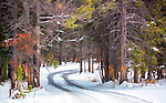 A snow covered path winds through the trees in Yellowstone National Park.