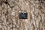 Tree species identification label, National arboretum, Westonbirt arboretum, Gloucestershire, England, UK - Cedrus Atlantica, Atlas Cedar