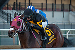 December 7, 2019: Shotski, ridden by Luis Saez, wins the 2019 running of the G2 Remsen at Aqueduct Racecourse in South Ozone Park, NY. Sophie Shore/ESW/CSM