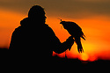 Falconry 00432-006.13 Falconer with hooded goshawk on fist is silhouetted against setting sun. Hunt, hawking, hawk.