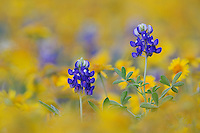 Texas Wildflowers Portfolio