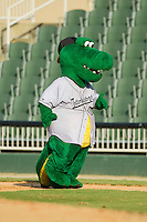 "Kannapolis Intimidators mascot ""Tim E. Gator"" runs the bases between innings of the South Atlantic League game against the Rome Braves at CMC-Northeast Stadium on August 25, 2013 in Kannapolis, North Carolina.  The Intimidators defeated the Braves 9-0.  (Brian Westerholt/Four Seam Images)"